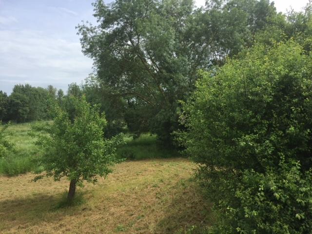 Vente Terrain Chalonnes sur Loire